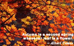 Juliann-Oct-14-quote